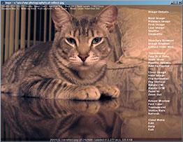 imgv-catshot-thumb.jpg
